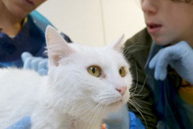 Meet a Neutering Officer and Vet Nurse