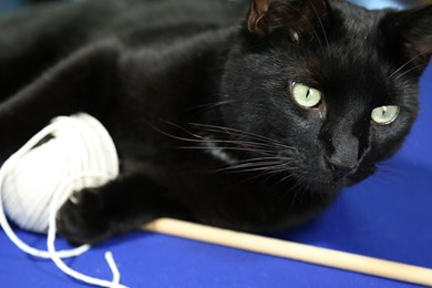 Make a fishing rod toy for your cat