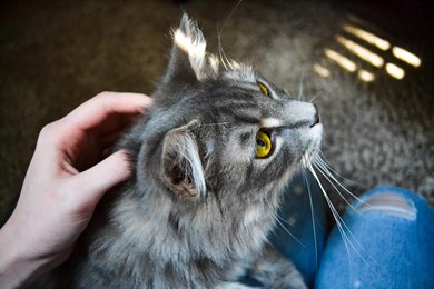 5 small ways you can help Cats Protection