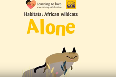 Video: The African wildcat: Alone