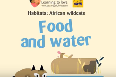 Video: The African Wildcat: food and water