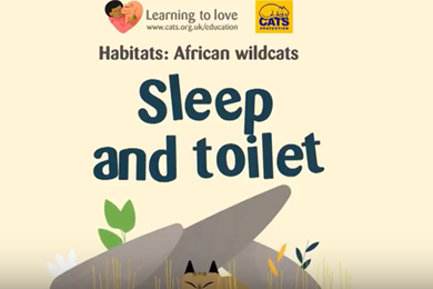 The African Wildcat - Sleep and toilet