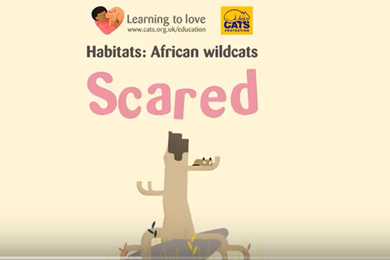 Video: The African wildcat: scared