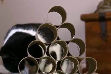 Video: how to make cat feeding toys