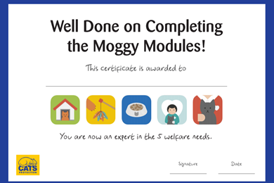 Moggy Modules certificate